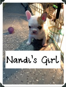 Nandi's Girl SOLD